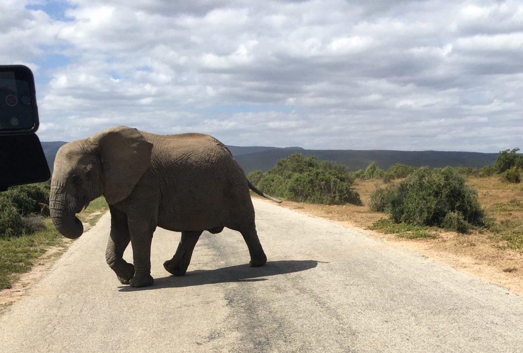 Un éléphant sur le chemin