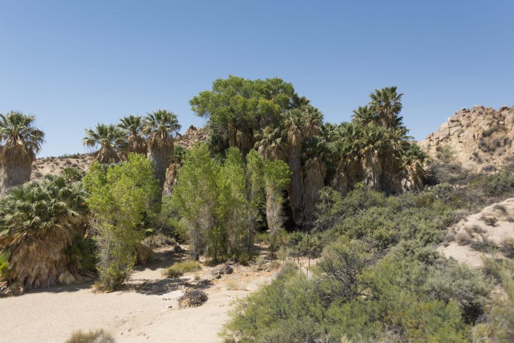 jardins de minis cactus