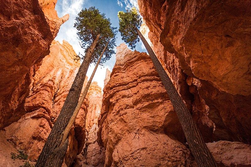 Scénic Drive : vue du canyon de l'intérieur