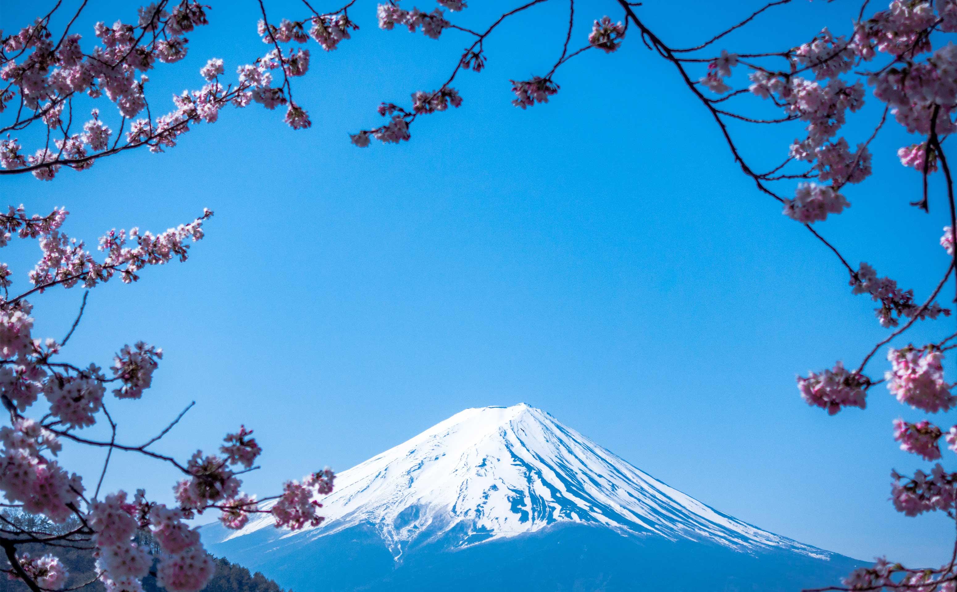 Mont Fuji entouré de fleurs de cerisiers