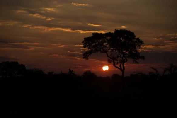 Le Kruger Park au coucher du soleil